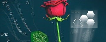 An electric rose by any other name….